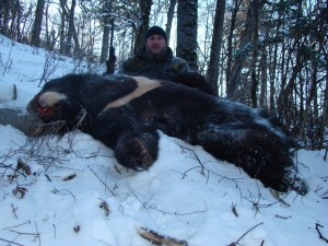 Asiatic blac bear, Khabarovsk