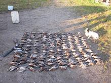 Woodcock Hunting in Russia